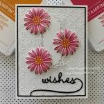 Daisy Lane Birthday Wishes